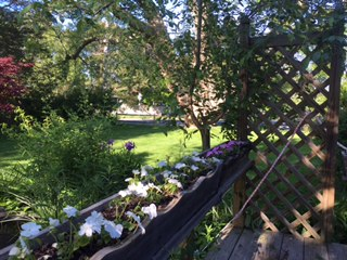 Cape VRBO garden (1)
